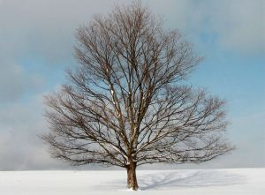 treefavewinter