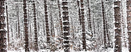treesnow